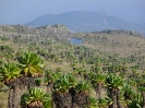 Mount Elgon_3