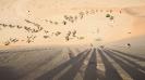 Namibia_40