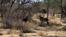 Namibia_8